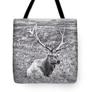 Tule Elk In Black And White  Tote Bag