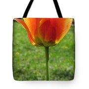 Tulip Backlit 14 Tote Bag