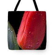 Tulip Close Up Tote Bag by Garry Gay