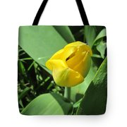 Tulip Day Old Bud Tote Bag