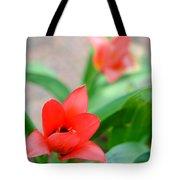 Tulip Of Dream Tote Bag