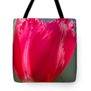Tulip On The Gray Background Tote Bag