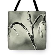 Tulip Poplar Empty Seed Heads - Black And White Tote Bag