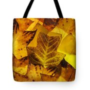 Tulip Tree Leaves In Autumn Tote Bag