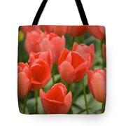 Tulips 33 Tote Bag