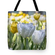 Tulips At Dallas Arboretum V28 Tote Bag