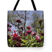 Tulips At Dallas Arboretum V35 Tote Bag