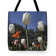 Tulips At Dallas Arboretum V36 Tote Bag
