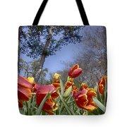 Tulips At Dallas Arboretum V37 Tote Bag
