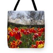 Tulips At Dallas Arboretum V39 Tote Bag