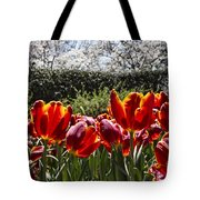 Tulips At Dallas Arboretum V41 Tote Bag