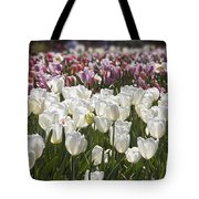 Tulips At Dallas Arboretum V52 Tote Bag