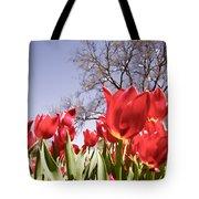 Tulips At Dallas Arboretum V62 Tote Bag