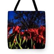 Tulips At Dallas Arboretum V63 Tote Bag