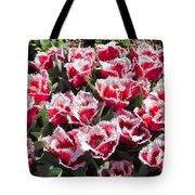 Tulips At Dallas Arboretum V70 Tote Bag