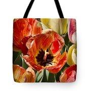 Tulips At Dallas Arboretum V81 Tote Bag