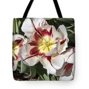 Tulips At Dallas Arboretum V91 Tote Bag
