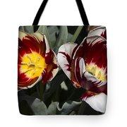 Tulips At Dallas Arboretum V92 Tote Bag