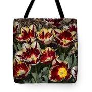 Tulips At Dallas Arboretum V93 Tote Bag