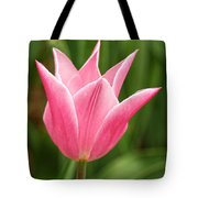 Tulips At Thanksgiving Point - 17 Tote Bag