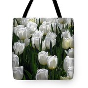 Tulips - Field With Love 19 Tote Bag