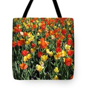 Tulips - Field With Love 50 Tote Bag