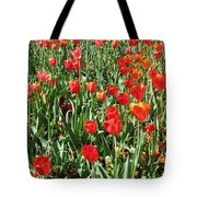 Tulips - Field With Love 62 Tote Bag