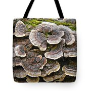 Turkey Tail Bracket Fungi -  Trametes Versicolor Tote Bag