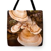 Turkey Tail Fungus 5 Tote Bag