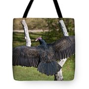 Turkey Vulture Cathartes Aura Tote Bag