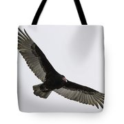Turkey Vulture In Flight Tote Bag by Thomas Young
