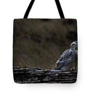 Twilight Owl Tote Bag