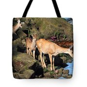 Twin Fawns And Mother Deer On The Shore Tote Bag