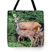 Twin Fawns And Mother Deer Tote Bag