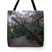 Twisted Oaks 1 Tote Bag