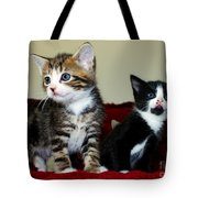 Two Adorable Kittens Tote Bag