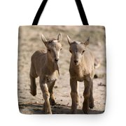 Two Aoudad Babies Playing Tote Bag