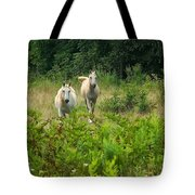 Two Appaloosa Horses  Tote Bag