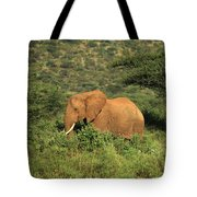 Two Elephants Walking Through The Grass Tote Bag