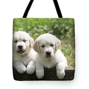 Two Golden Retriever Puppies Tote Bag