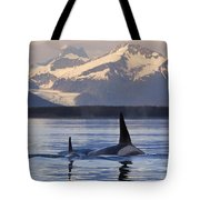 Two Killer Whales Surface In Lynn Canal Tote Bag