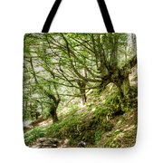 two little brothers Chasing Fairies in theBeech Forest on a summer day Tote Bag