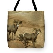 Two Male Rams At Zion Tote Bag