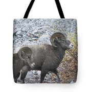 Two Male Rams Tote Bag