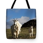 Two Mountain Goats Oreamnos Americanus Tote Bag