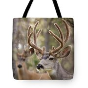 Two Mule Deer Bucks With Velvet Antlers  Tote Bag