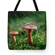 Two Mushrooms Tote Bag