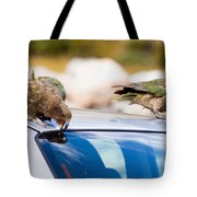 Two Nz Alpine Parrot Kea Trying To Vandalize A Car Tote Bag