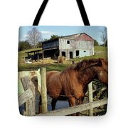 Two Quarter Horses In A Barnyard Tote Bag