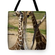 Two Reticulated Giraffes - Giraffa Camelopardalis Tote Bag